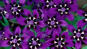 Flowers and Gardens HQ wallpapers Collection 1 7a294e108222594