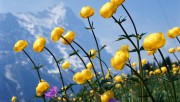 Flowers and Gardens HQ wallpapers Collection 2 4f7559108363208
